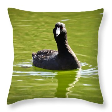 American Coot Portrait Throw Pillow