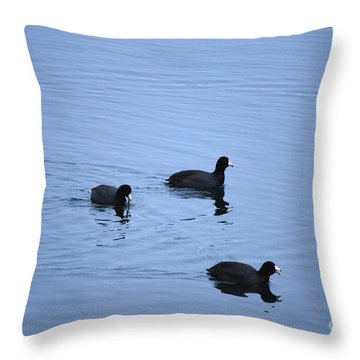 American Coots 20120316_39a Throw Pillow by Tina Hopkins