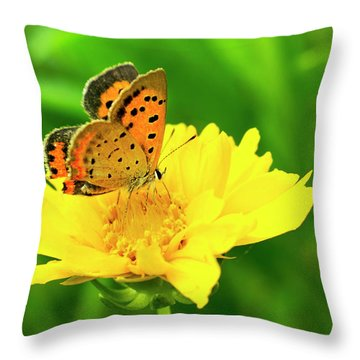 American Copper Butterfly Throw Pillow
