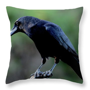 American Crow In Thought Throw Pillow