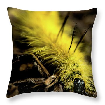 American Dagger Moth Caterpillar Throw Pillow