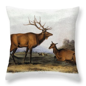 American Elk, 1846 Throw Pillow by Granger