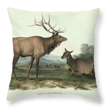 American Elk Throw Pillow by John James Audubon