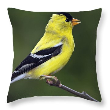 American Golden Finch Throw Pillow by William Lee