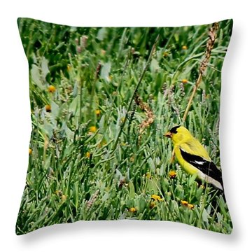 Throw Pillow featuring the photograph American Goldfinch  by Christy Pooschke