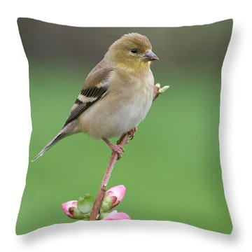 Throw Pillow featuring the photograph American Goldfinch by Doug Herr