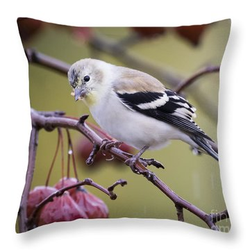 American Goldfinch In The Rain Throw Pillow