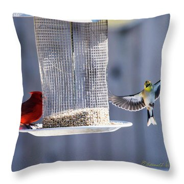 American Goldfinch Inbound Throw Pillow