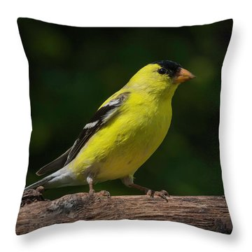 American Goldfinch Male Throw Pillow by Kenneth Cole