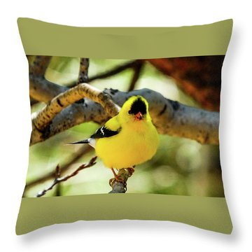 American Goldfinch On Aspen Throw Pillow
