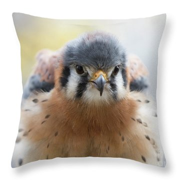 American Kestrel 1 Throw Pillow