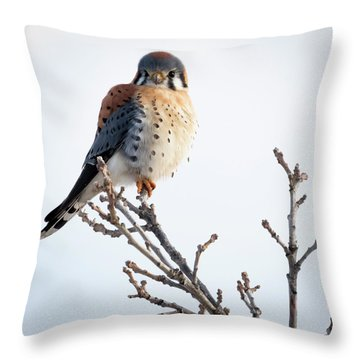 American Kestrel At Bender Throw Pillow