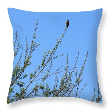 American Kestrel Atop Pecan Tree Throw Pillow