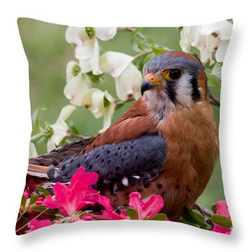 American Kestrel In The Springtime Throw Pillow