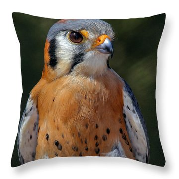 American Kestrel Portrait  Throw Pillow