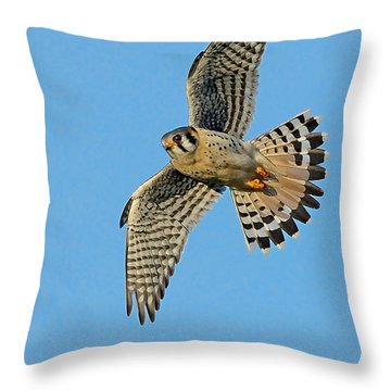 American Kestrel  Throw Pillow
