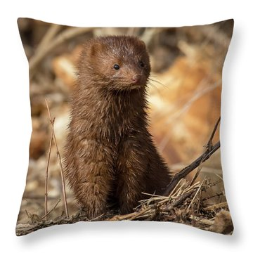 Throw Pillow featuring the photograph American Mink At Johnson Park by Ricky L Jones