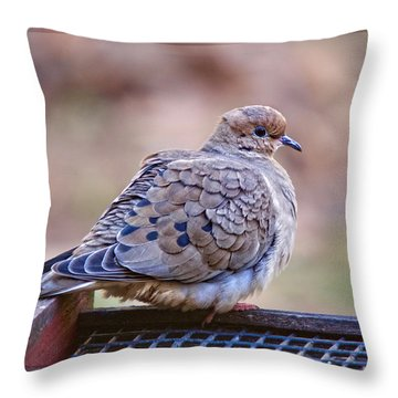 Throw Pillow featuring the photograph American Mourning Dove by Robert L Jackson