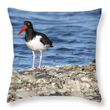American Oystercatcher Throw Pillow