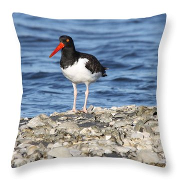 American Oystercatcher Throw Pillow