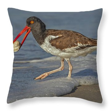 American Oystercatcher Grabs Breakfast Throw Pillow by Susan Candelario