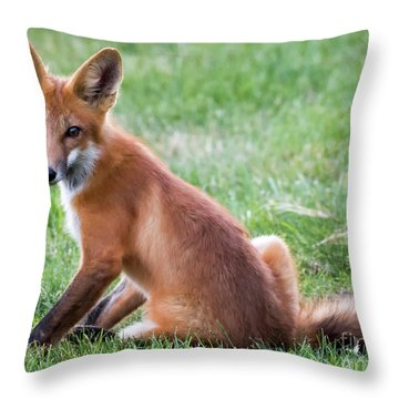 American Red Fox  Throw Pillow