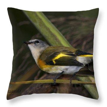 American Redstart Throw Pillow