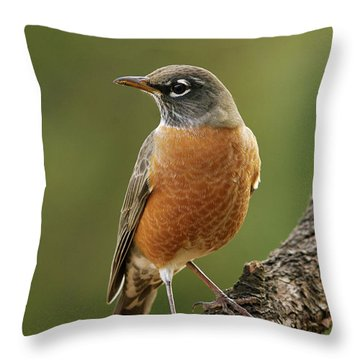American Robin Throw Pillow by Doug Herr