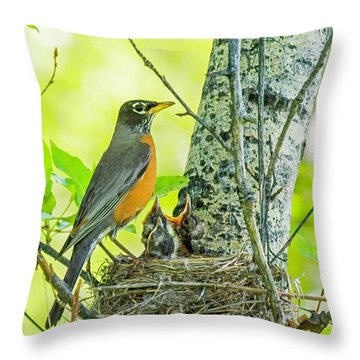 American Robin Feeding Chicks Throw Pillow