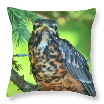 Throw Pillow featuring the photograph American Robin Fledgling by Debbie Stahre