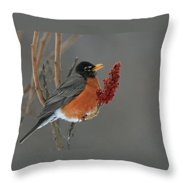 American Robin On Sumac Throw Pillow
