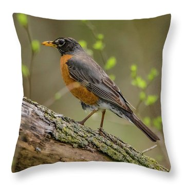 American Robin Throw Pillow by Ray Congrove