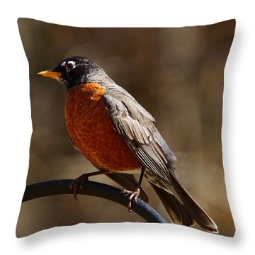 Throw Pillow featuring the photograph American Robin by Robert L Jackson