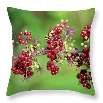 American Spikenard Throw Pillow