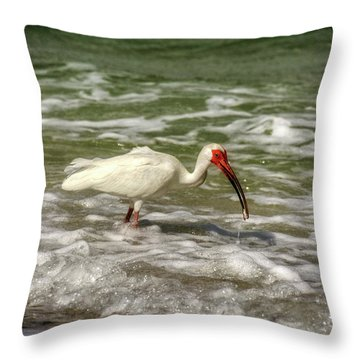 American White Ibis Throw Pillow by Chrystal Mimbs