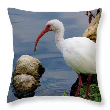 American White Ibis Throw Pillow