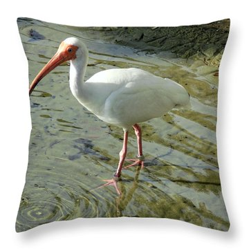 American White Ibis Throw Pillow