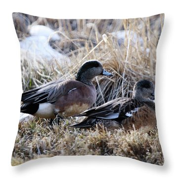American Wigeon Mated Pair Throw Pillow