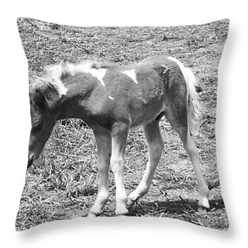 Amish Colt Throw Pillow by Eric  Schiabor