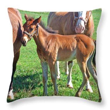 Amish Pony Throw Pillow