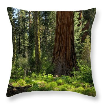 Among Giants Throw Pillow by Sue Cullumber