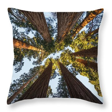 Amongst The Giant Sequoias Throw Pillow by Alpha Wanderlust
