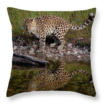 Amur Leopard Reflection Throw Pillow