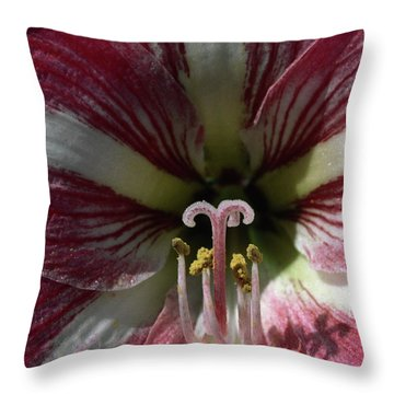 Amaryllis Flower Close-up Throw Pillow by Sally Weigand