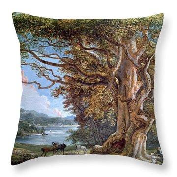 An Ancient Beech Tree Throw Pillow
