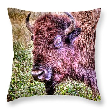 An Astonished Bison Throw Pillow