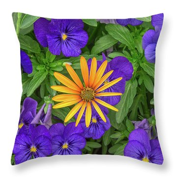 An Aureole Of Sublime Beauty Throw Pillow