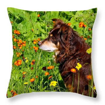 An Aussie's Thoughtful Moment Throw Pillow by Debbie Oppermann