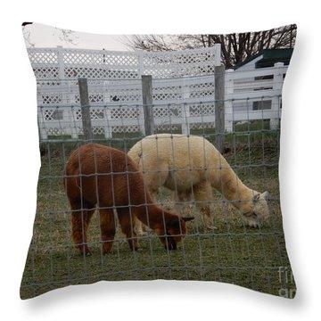 An Evening Graze Throw Pillow