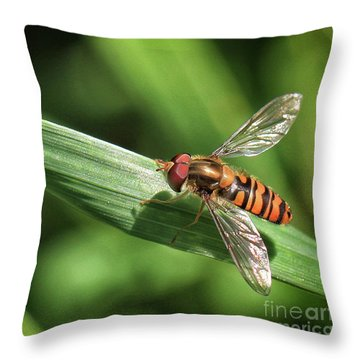 An Insect On A Piece Of Grass Throw Pillow by Stephan Grixti